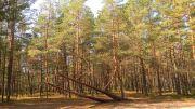 Συστάδα Δασικής Πεύκης στο Εθνικό Πάρκο Ķemeri